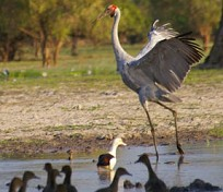 Brookes Australia Tours 3 Days Kakadu & Arnhem Tour