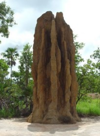 Travel North Natural Wonders of the Top End Tour