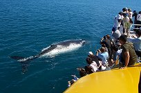 Sorot of Hervey Bay Whale Watching